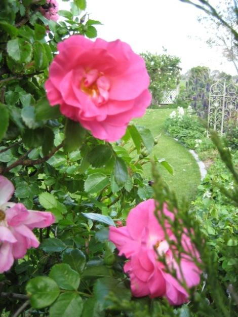 rose-view.jpg